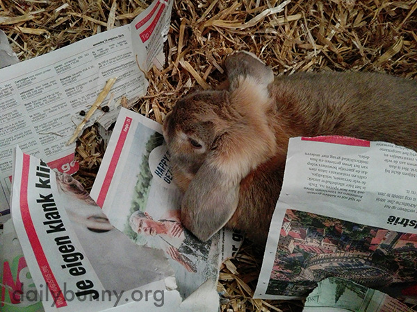 "Bunny's Been Doing a Very Thorough Job of ""Reading"" the Newspaper"