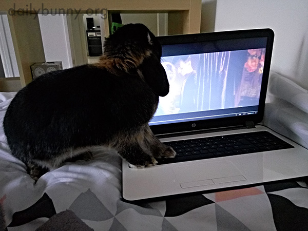 Human Was Watching a Movie Without Bunny?!