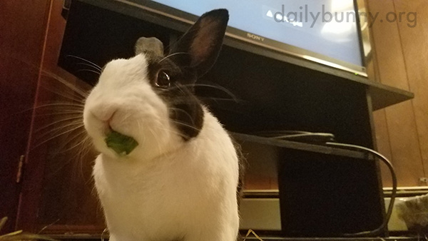 Hey Bunny, You've Got a Little Something on Your Lip There