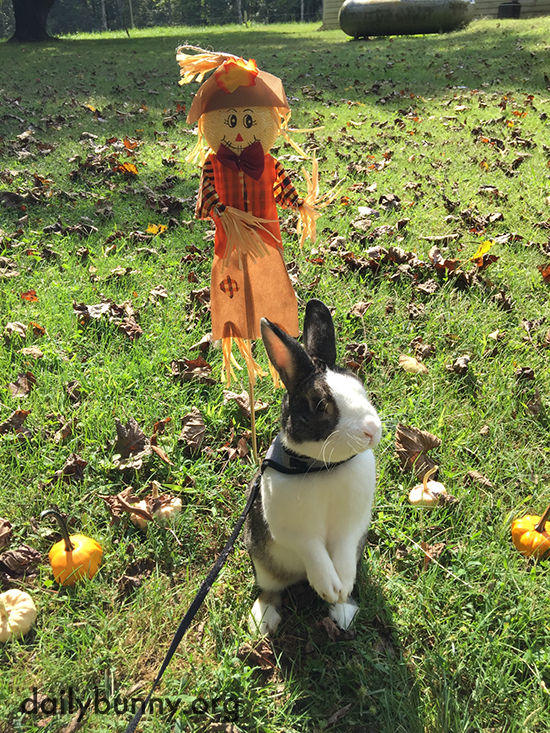 Autumn Bunny Hangs Out with Pumpkins and a Scarecrow 2
