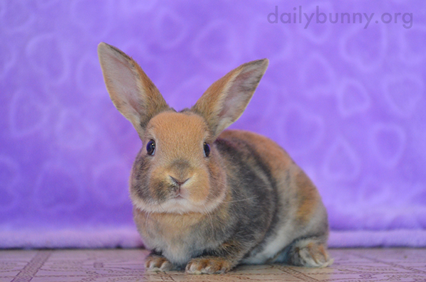 Bunny Poses for a Sweet Portrait