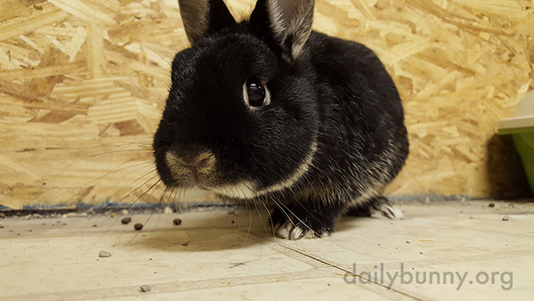 A Human's Sweet Goodbye to Her Bunnies 2