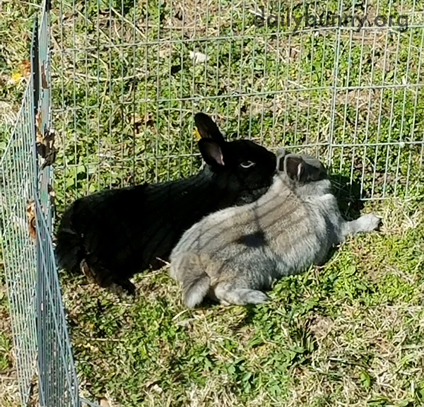 Bunnies Get Cuddly in the Sunshine