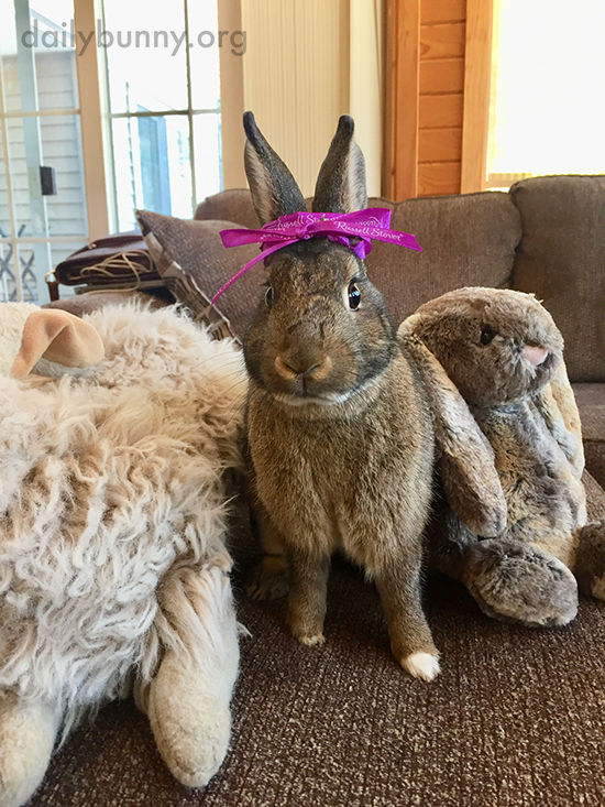 Bunny the Birthday Girl Has a Party with Her Friends