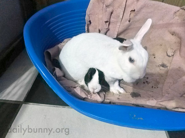 Bunny Will Forfeit the Wrestling Match If It Means She Gets Cuddles from Her Friend