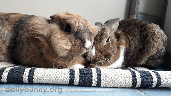 These Bunnies Are Clearly Nuzzling Experts