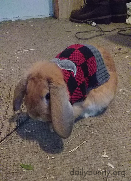 Bunny Is Thankful for a Lot of Things, But Not This Sweater