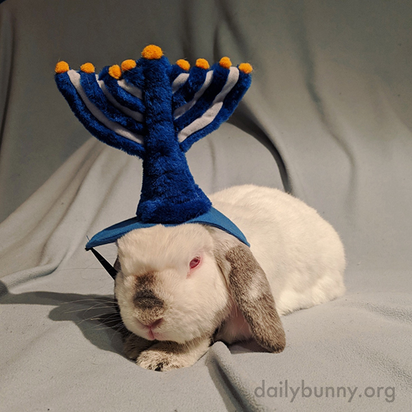 Bunny's Hanukkah Gift to Human Is Patiently Posing for a Holiday Photoshoot