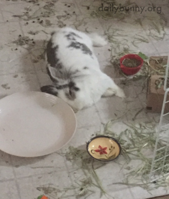 Bunny Conks Out After a Very Successful Mess-Making Session