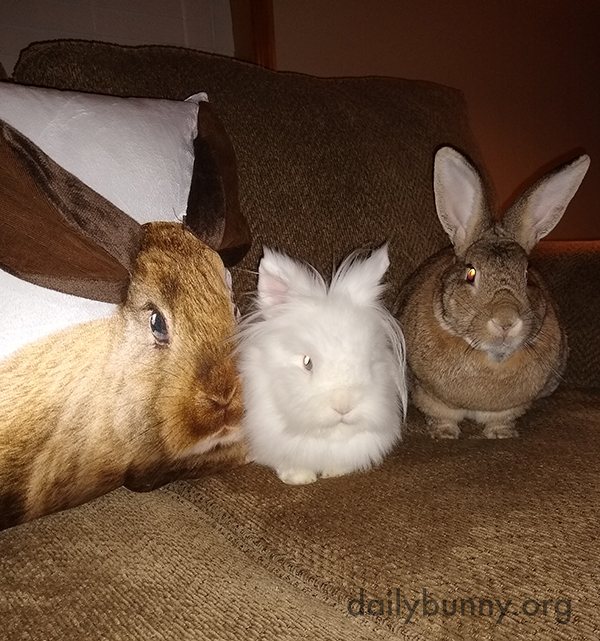 Bunnies Sit Nicely with a Comfy Friend