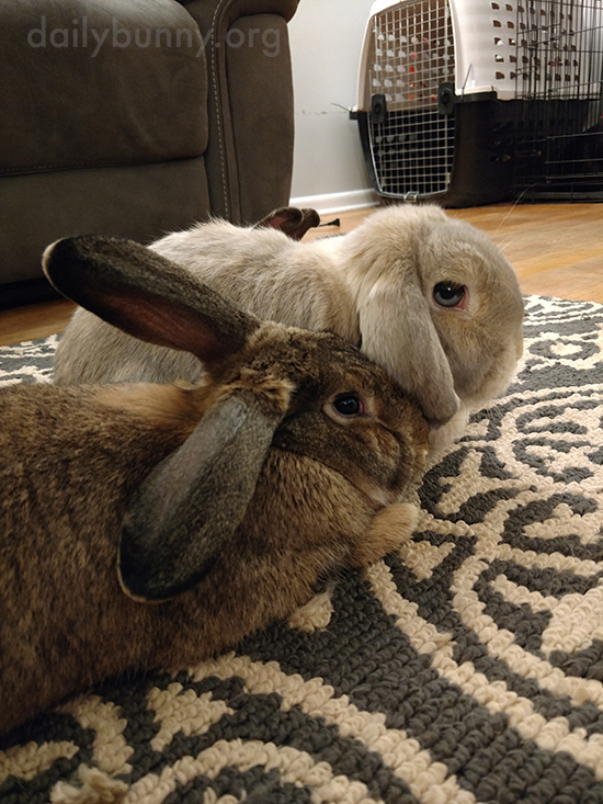 Bunnies Are New Best Friends