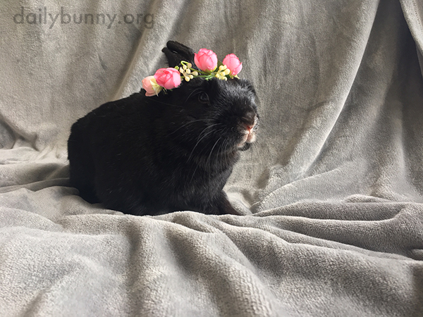 Bunny Wears a Pretty Flower Crown to Celebrate Her Birthday 1