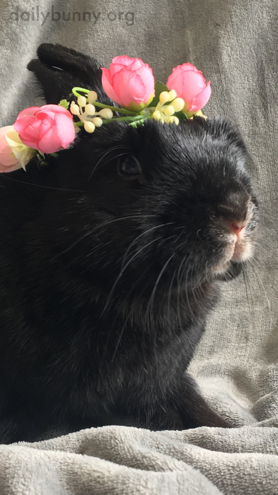 Bunny Wears a Pretty Flower Crown to Celebrate Her Birthday 2