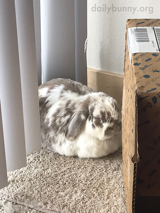 Don't Think We Can't See Your Work on the Shade, Bunny