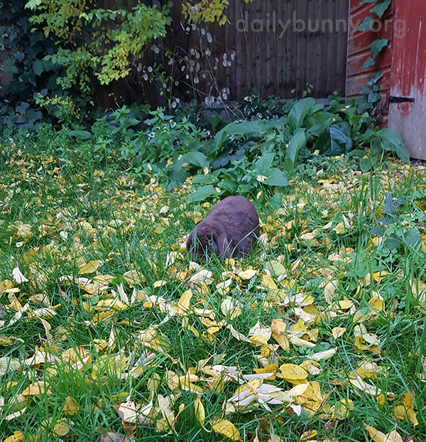 Bunny Is 100% Invisible Behind Those Blades of Grass