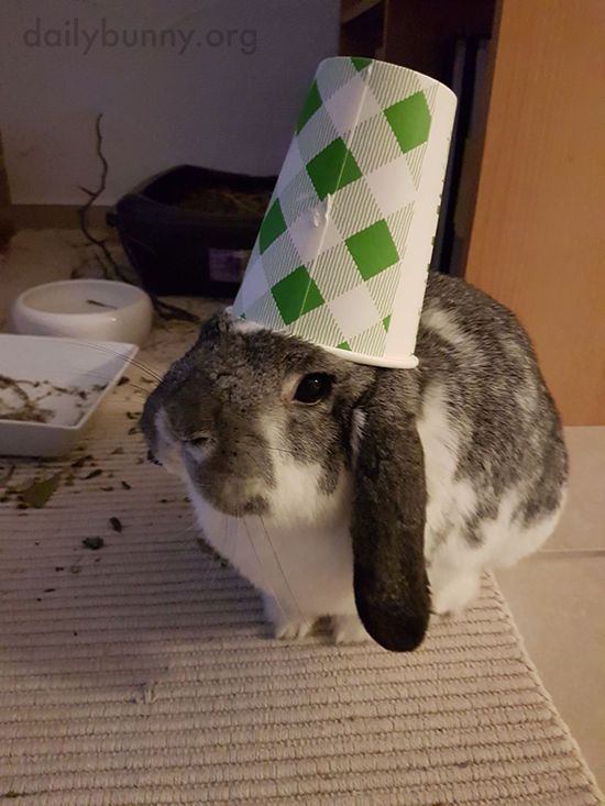 Love the Hat, Bunny