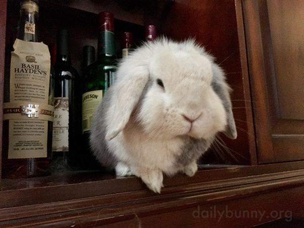 Next Thing You Know Bunny's Going to Be Throwing Parties When Her Humans Are Out