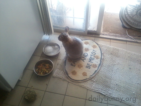 Bunny Before and After a Meal 1