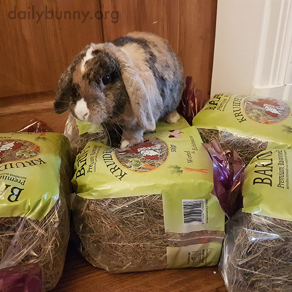 Bunny Is Beside Himself with Excitement Over the Hay Delivery