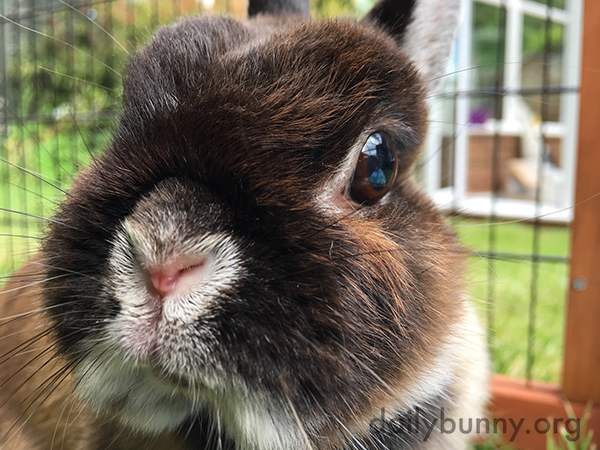 A Bunny Nose So Close Up You Can Boop It