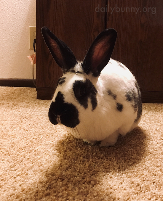 Those Big Bunny Ears Are at Attention