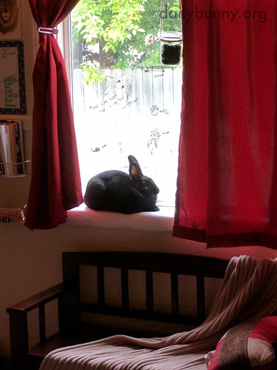 Bunny Has the Best View of All the Outdoor Happenings