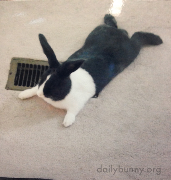 Bunny Sploot