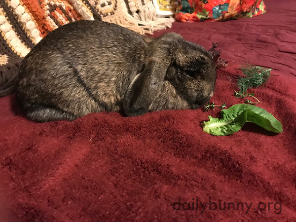 Newly-Spayed Bunny Is Not Tempted by These Greens 1