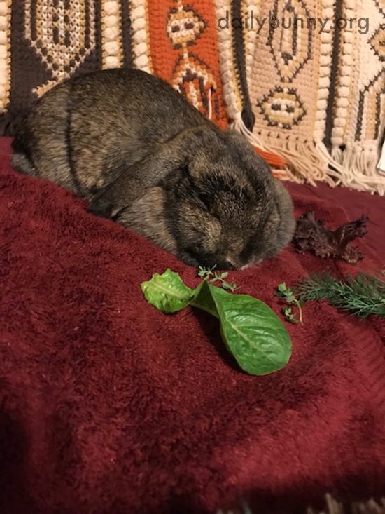 Newly-Spayed Bunny Is Not Tempted by These Greens 2