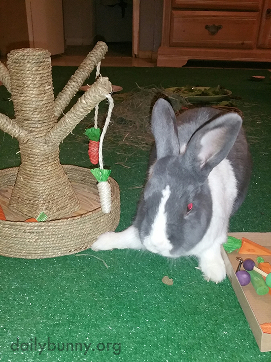 That's a Pretty Good Array of Toys, Bunny