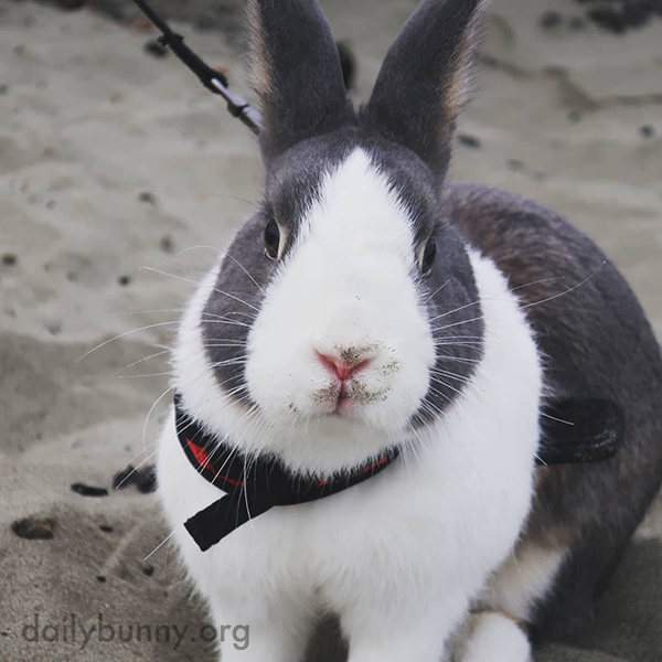 The Beach Is the Ultimate Digging Destination for a Bunny