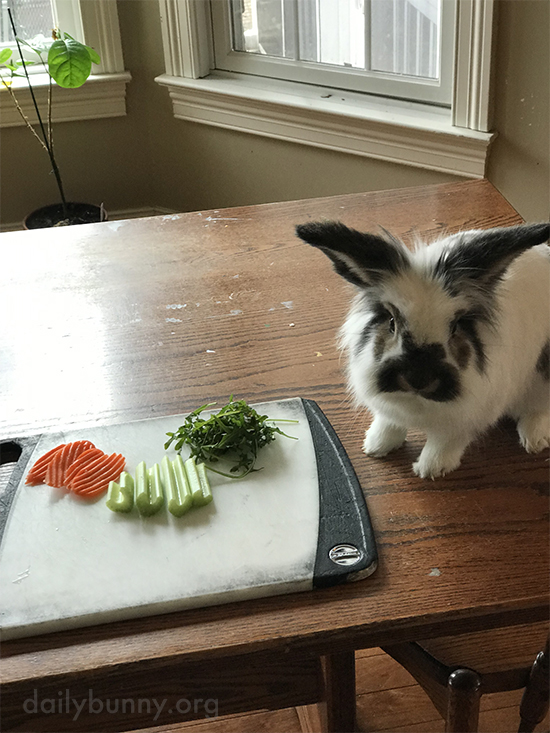 We've Cut the Vegetables, Human, Can We Start Eating Them Already?