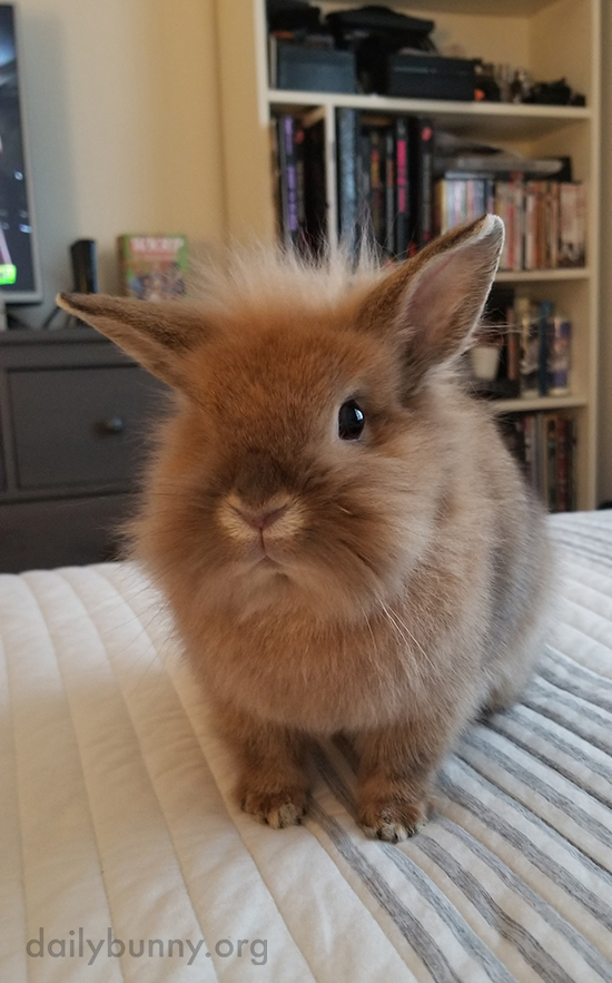Just Look at That Wispy Tuft of Fur on Bunny's Head