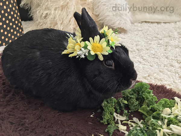 Bunny Celebrates the Arrival of Spring with a Flower Crown - and a Snack 2