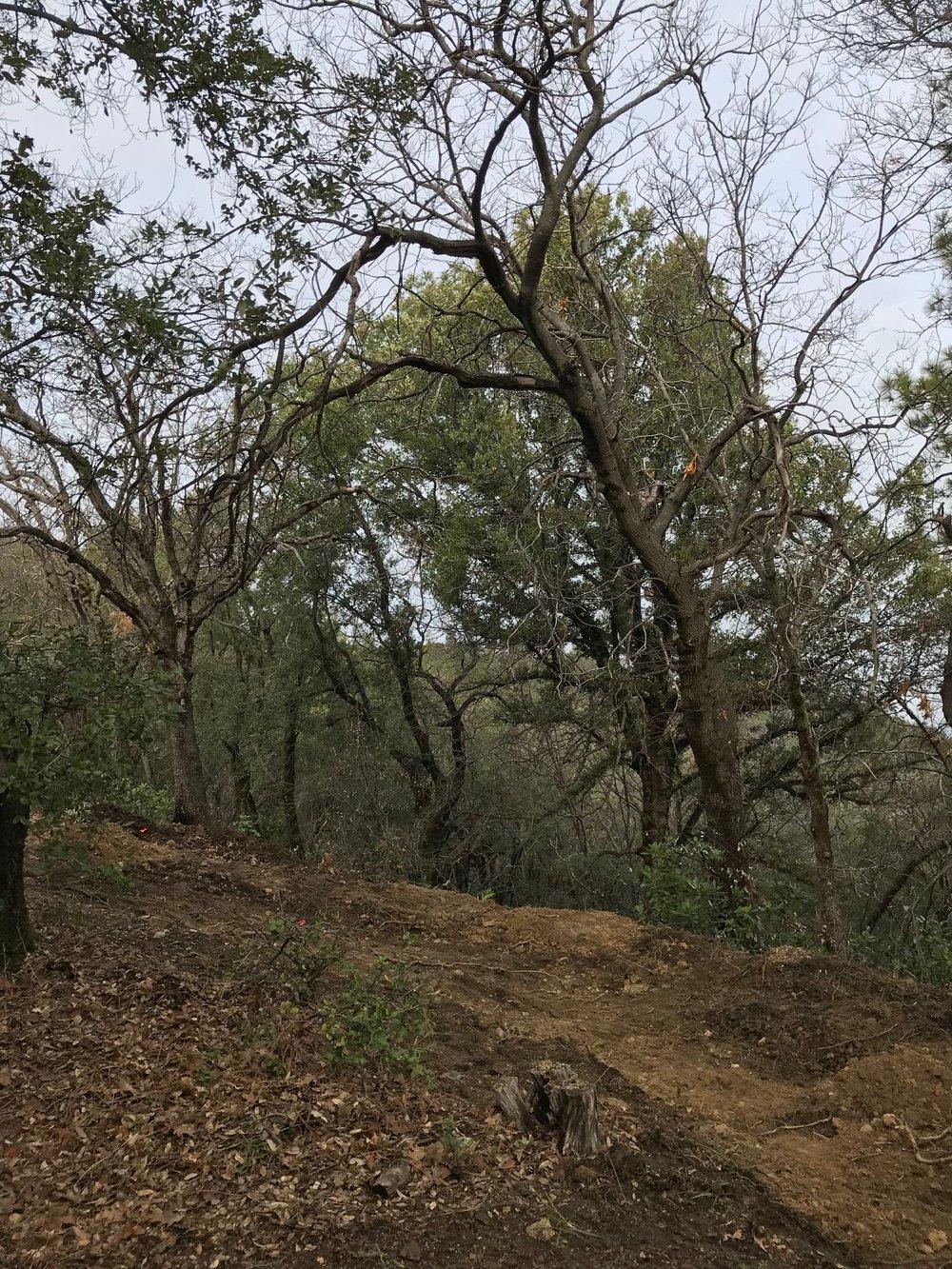 Berm mid-excavation (uphill)