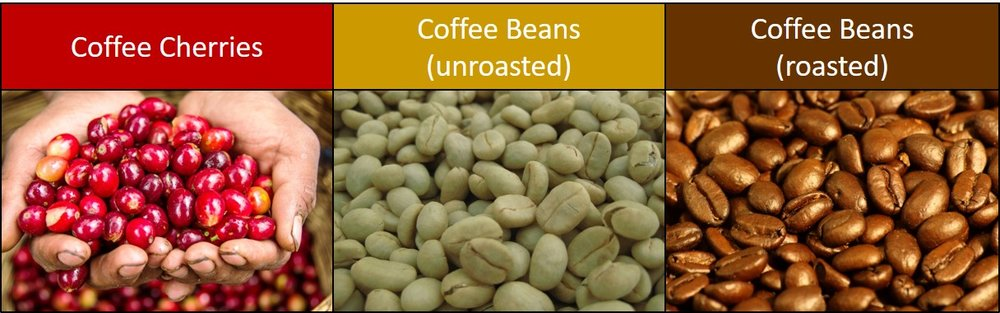coffee bean stages.jpg