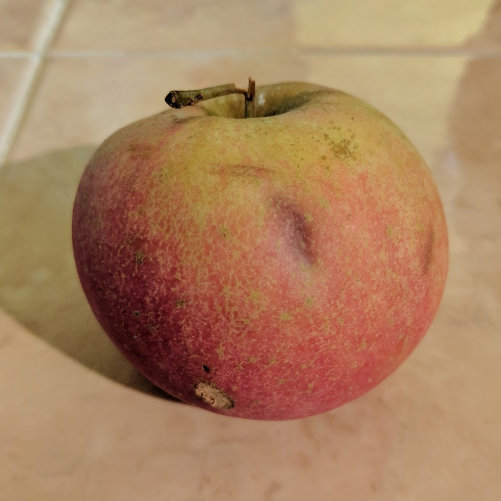 Hand-picked Fuji Apple from the farm