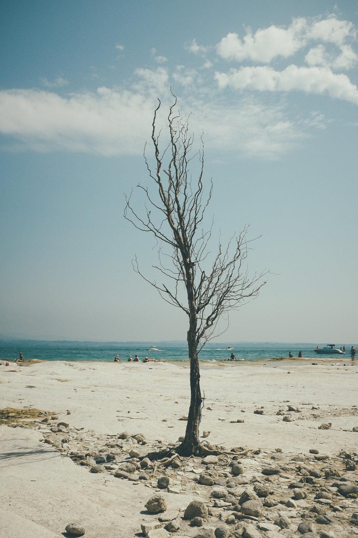 Sirnione Tree.jpg