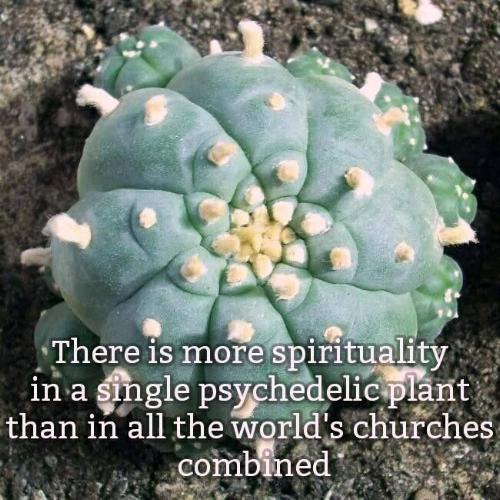 e6a8bca36713933ca7b240def5f12f3e--peyote-cactus-spiritual-awakening.jpg