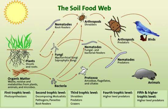 soil-food-web.jpg
