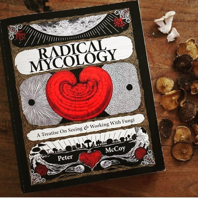 This is my favorite book on fungi by Peter Mccoy @mycologos @radmycology 🙏🍄 Peter is also starting an online mycology school that I'm really excited for! This book is long but there is so much good info! I made a goal to read at least 10 pages a day and i finished it in a couple months. I love the section about women in mycology and the history of psilocybin! Lots of great mushroom growing tips and info on fungi in general. Do you have any other favorite biology focused fungi books? #mycology #fungi #mushrooms #mushroomhunting #mushroomgrowing #psychedelics #magicmushrooms #trippy #psychonaut #legalizeit #biology #ecology #mycophile #bookclub #readmore #womeninstem #plantsarefriends #mycoilluminati
