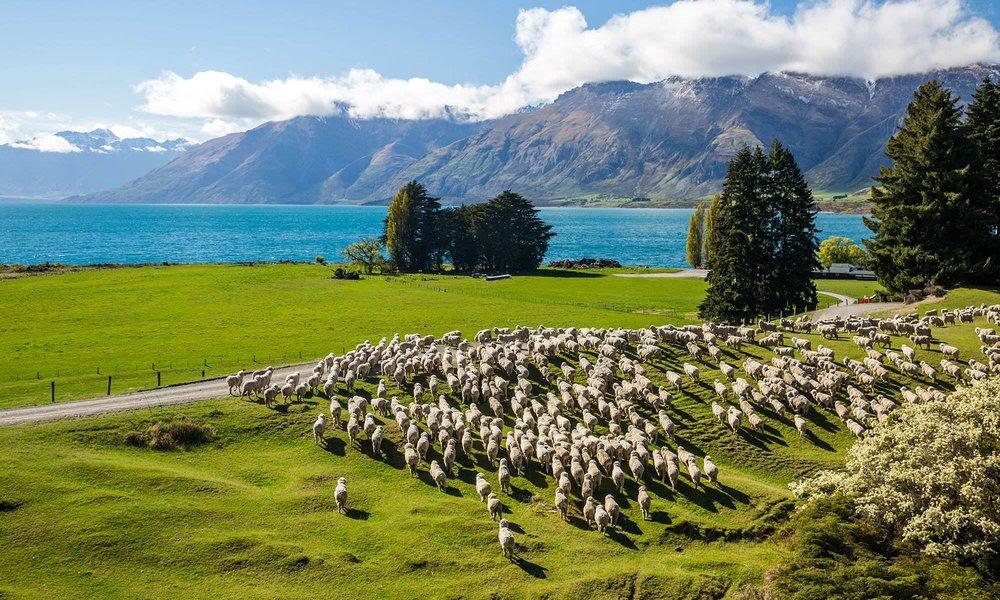 New-Zealand-3.jpg