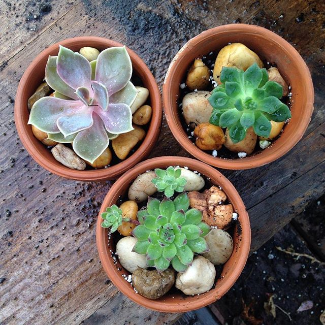 We will be at the street fair in Highland Park this Sunday ! Come pick up one of these guys along with your art supplies. #highlandparknj #streetfair #succulents #artsupplies