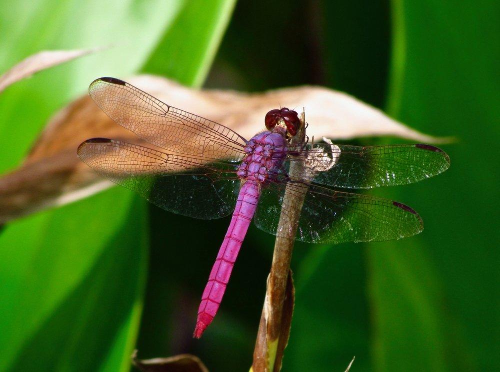 dragonfly 9511 fav.jpg