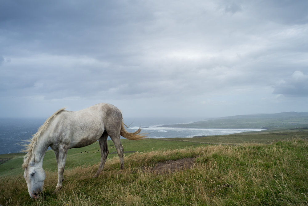 Grazing horses at the Cliffs of Moher - in pursuit of a photo like this one, I touched my forehead to electrified wire and was shocked. The feeling wore off an hour or so later :-)