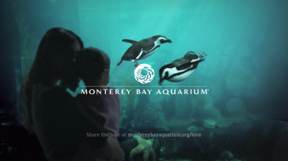 Monterey Bay Aquarium - Broadcast & Web