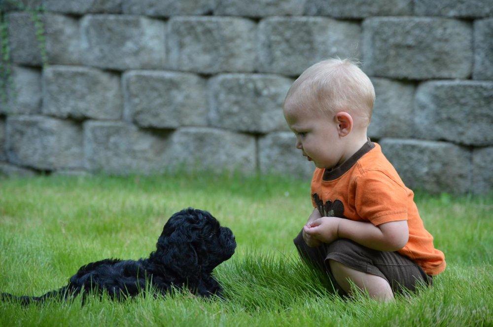 black-labradoodle-puppy.jpeg