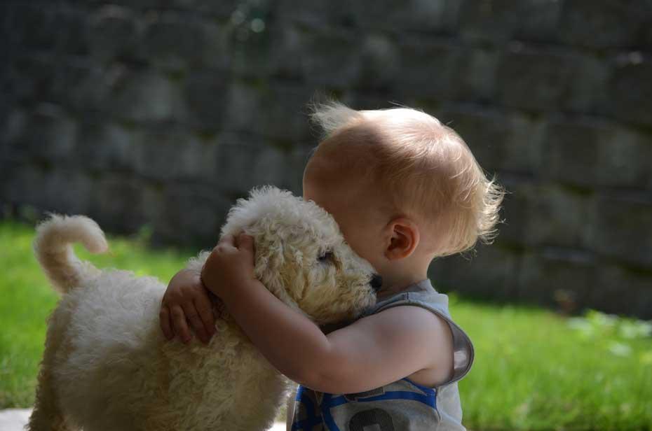 Goldendoodle puppy social skills