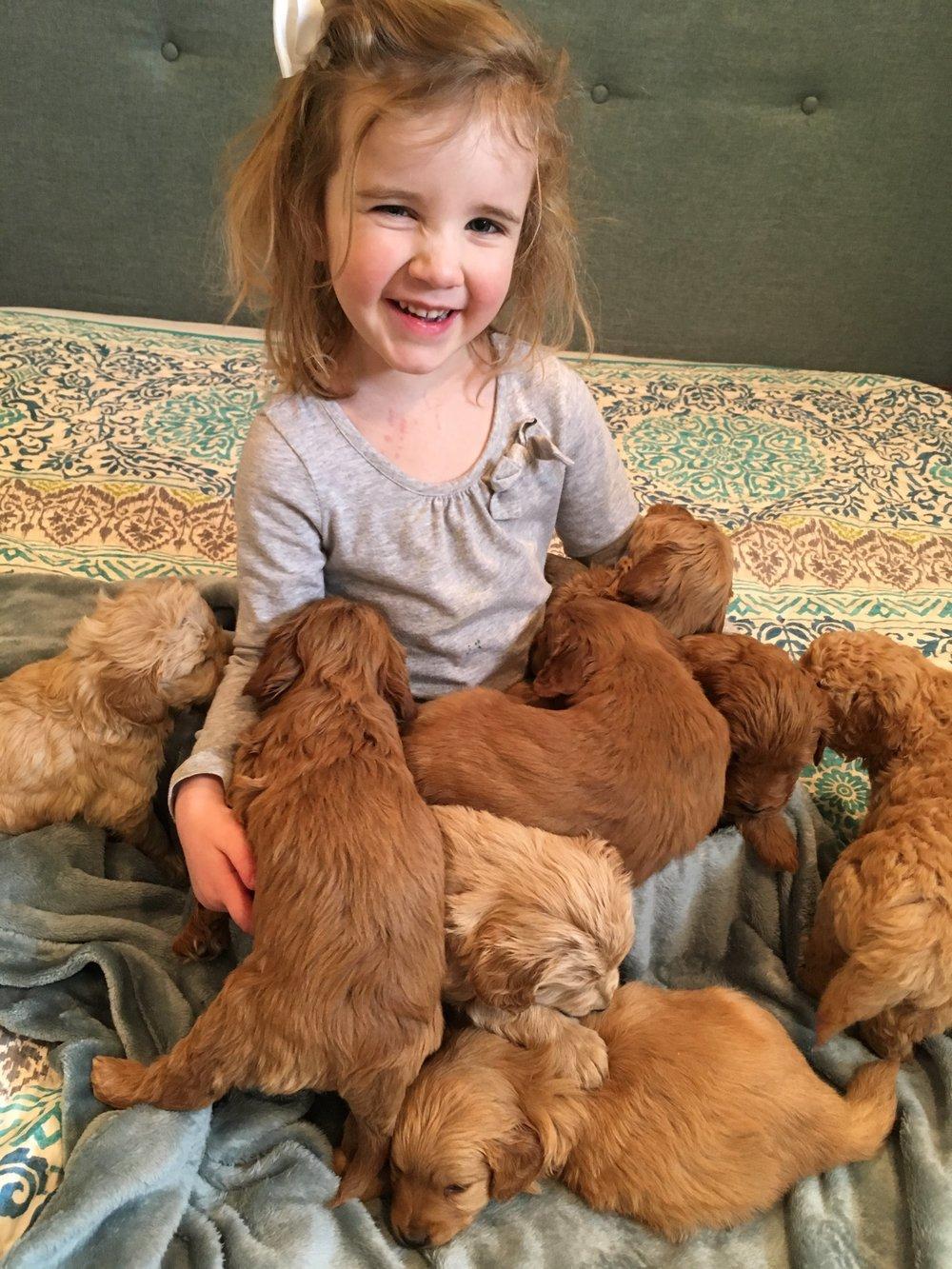 ALL PUPPIES.JPG