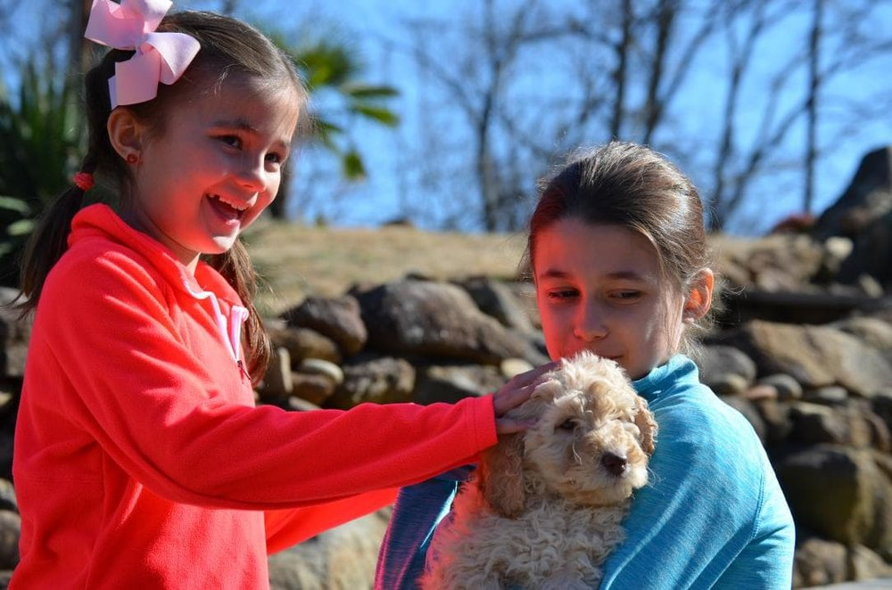 Puppy socialization with kids